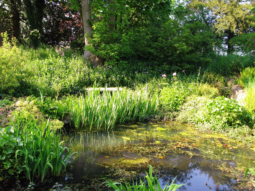 The pond and wild garden the old vicarage garden for The landscape gardener